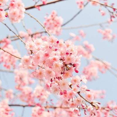 Pavasaris ziedai
